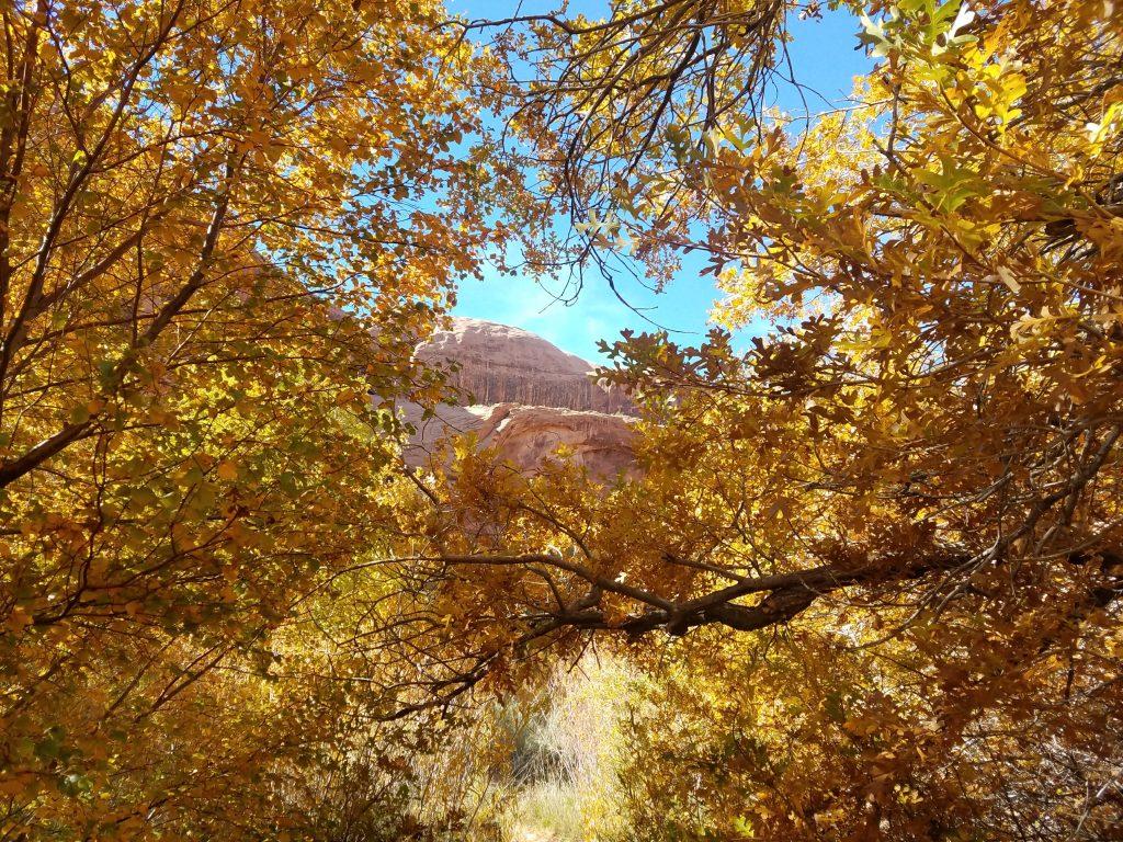 Moab Grandstaff Trail